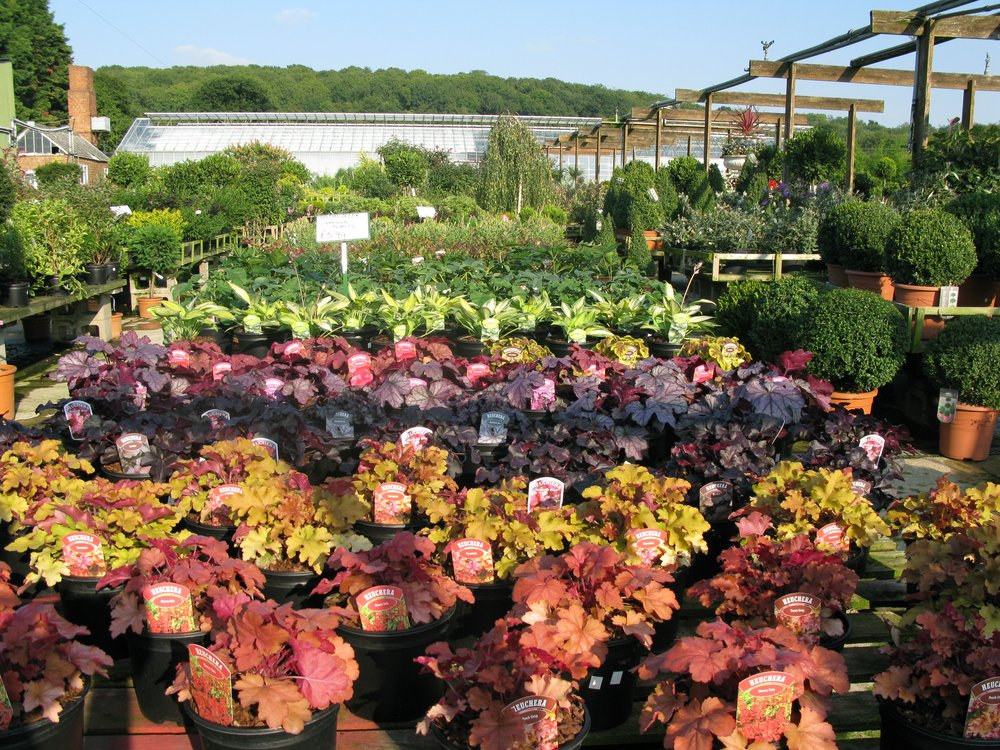 Plants Galore Nursery (Photo credit: Plants Galore)